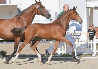 Pferde im Trapp von Fotograf PZV Moselland-Luxemburg